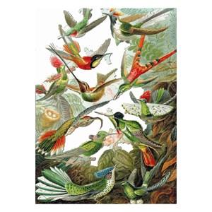 """Puzzle Michele Wilson (A539-500) - Ernst Haeckel: """"Les Colibris"""" - 500 pièces"""