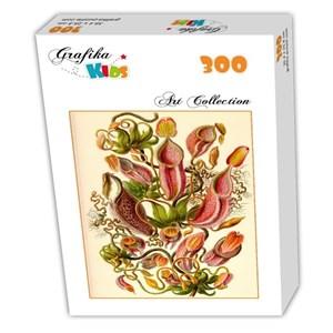 """Grafika Kids (00307) - Ernst Haeckel: """"Kunstformen der Natur, Nepenthes, 1904"""" - 300 pièces"""