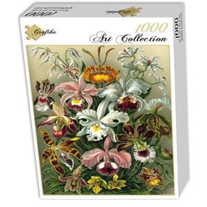"Grafika (00617) - Ernst Haeckel: ""Kunstformen der Natur, Orchidae, 1904"" - 1000 pièces"