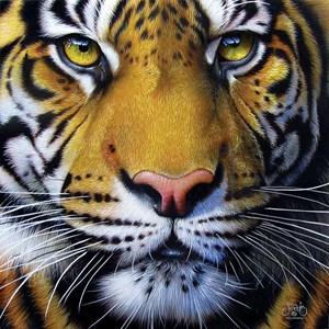 "SunsOut (58628) - JQ Licensing: ""Golden Tiger Face"" - 1000 pièces"