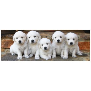 """Dino (39324) - """"Puppies"""" - 150 pièces"""