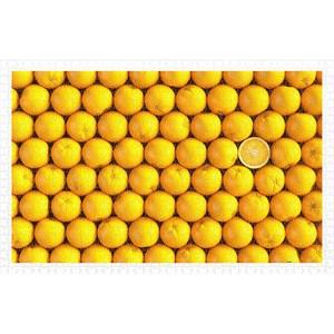 "Pintoo (h1992) - ""Fruits, Orange"" - 1000 pièces"