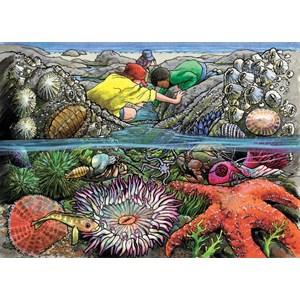 """Cobble Hill (58805) - """"Exploring the Seashore"""" - 35 pièces"""